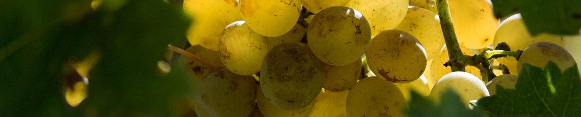 Kent Vineyards A-Z Index